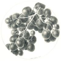 Druiven 2015 Menno Balm