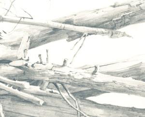 Tree trunks detail 2015 Menno Balm