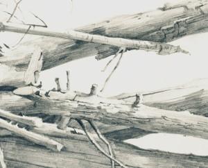 Stapel boomstammen detail 2015 Menno Balm